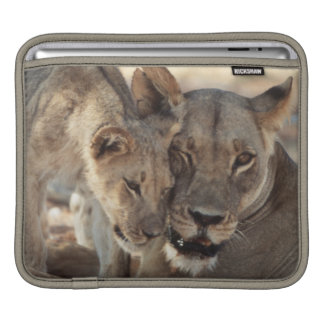 South Africa, Kalahari Gemsbok National Park 1 Sleeve For iPads