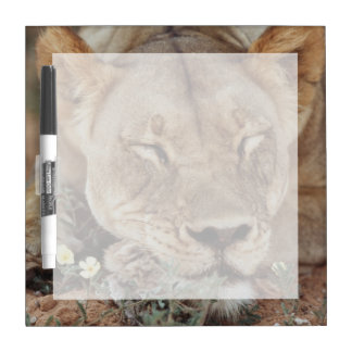 South Africa, Kalahari Gemsbok National Park 2 Dry Erase Board