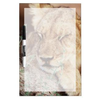 South Africa, Kalahari Gemsbok National Park 5 Dry-Erase Board