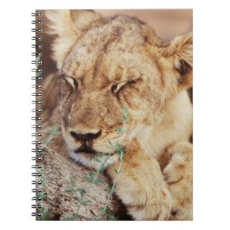 South Africa, Kalahari Gemsbok National Park 5 Notebook
