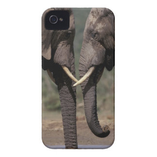 South Africa, Kalahari-Gemsbok NP, Gemsbok at Case-Mate iPhone 4 Case