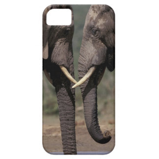 South Africa, Kalahari-Gemsbok NP, Gemsbok at iPhone SE/5/5s Case