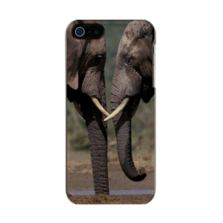South Africa, Kalahari-Gemsbok NP, Gemsbok at Metallic Phone Case For iPhone SE/5/5s