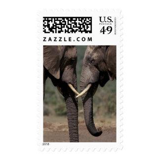 South Africa, Kalahari-Gemsbok NP, Gemsbok at Stamps