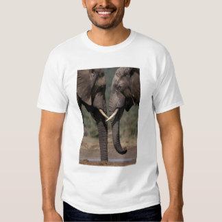 South Africa, Kalahari-Gemsbok NP, Gemsbok at T-shirt