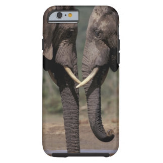 South Africa, Kalahari-Gemsbok NP, Gemsbok at Tough iPhone 6 Case