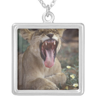 South Africa, Kgalagadi Transfrontier Park, Lion Silver Plated Necklace