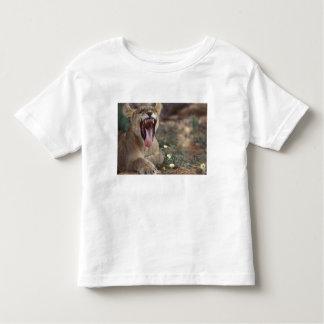 South Africa, Kgalagadi Transfrontier Park, Lion Toddler T-shirt