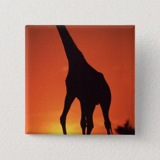 South Africa, Kruger NP.  Giraffe (Giraffa Pinback Button