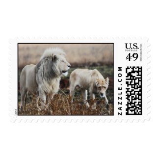 South Africa Lion as king Postage