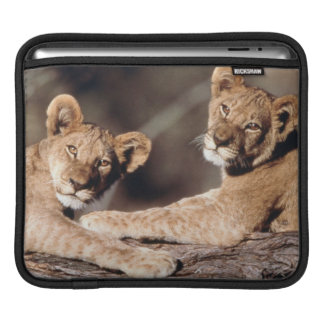 South Africa, lion cubs iPad Sleeve