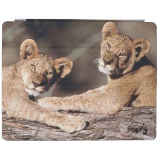 South Africa, lion cubs iPad Smart Cover