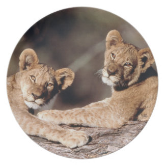 South Africa, lion cubs Melamine Plate
