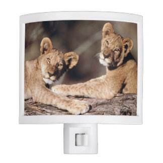 South Africa, lion cubs Night Light
