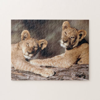 South Africa, lion cubs Puzzles
