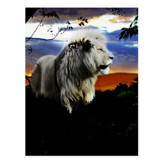 South Africa Lion in the Jungle Postcard