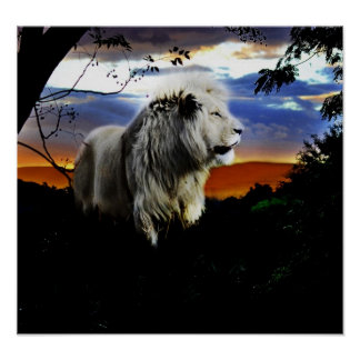 South Africa Lion in the Jungle Poster