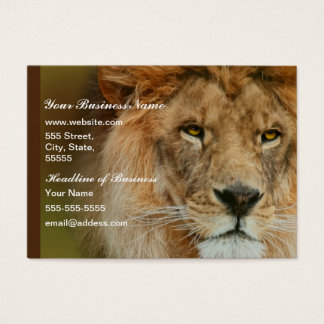 South Africa Majestic Lion Close up Business Card