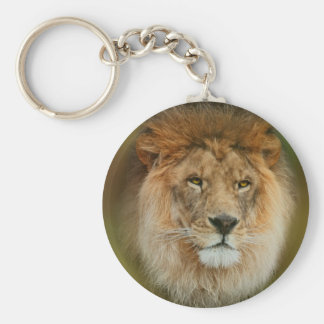 South Africa Majestic Lion Close up Keychain