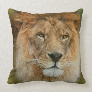 South Africa Majestic Lion Close up Throw Pillow