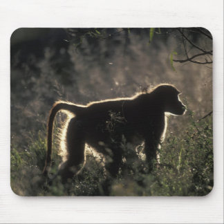 South Africa, Pilanesburg Game Reserve, Chacma Mouse Pad