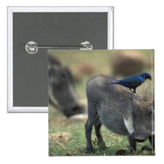 South Africa, Pilanesburg GR, Warthog Pin