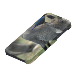 South Africa, Pilanesburg GR, Warthog Cover For iPhone SE/5/5s