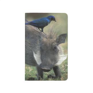 South Africa, Pilanesburg GR, Warthog Journal