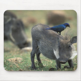 South Africa, Pilanesburg GR, Warthog Mouse Pad