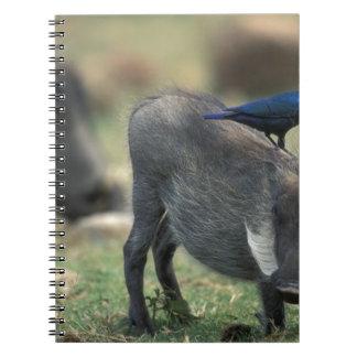 South Africa, Pilanesburg GR, Warthog Notebook