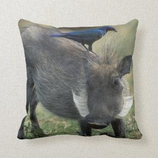 South Africa Pilanesburg GR Warthog Pillows