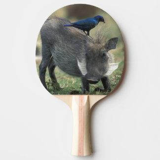 South Africa, Pilanesburg GR, Warthog Ping-Pong Paddle
