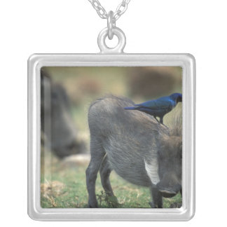 South Africa, Pilanesburg GR, Warthog Silver Plated Necklace