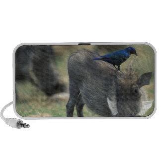 South Africa, Pilanesburg GR, Warthog Travel Speaker