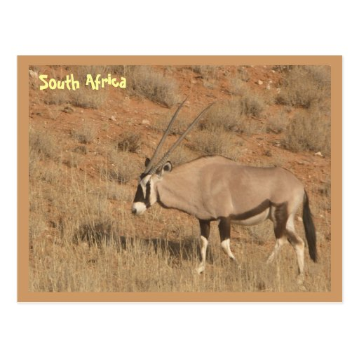 South Africa Post Card