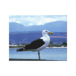 South Africa seagull Canvas