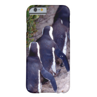 South Africa, Simons Town. Follow the leader. Barely There iPhone 6 Case