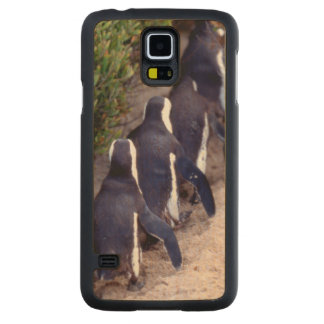 South Africa, Simons Town. Follow the leader. Carved® Maple Galaxy S5 Case