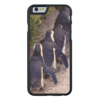 South Africa, Simons Town. Follow the leader. Carved Maple iPhone 6 Case