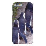 South Africa, Simons Town. Follow the leader. iPhone 6 Case