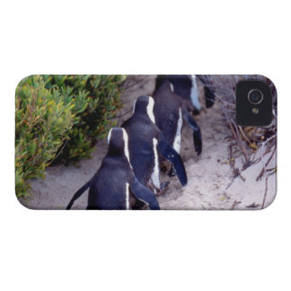South Africa, Simons Town. Follow the leader. Case-Mate iPhone 4 Case
