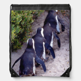 South Africa, Simons Town. Follow the leader. Drawstring Backpack