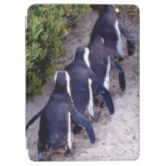 South Africa, Simons Town. Follow the leader. iPad Air Cover