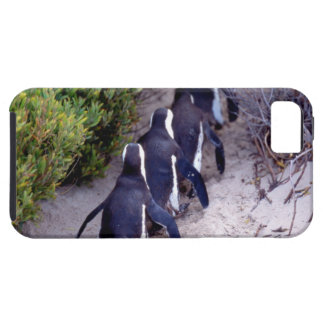 South Africa, Simons Town. Follow the leader. iPhone 5 Covers