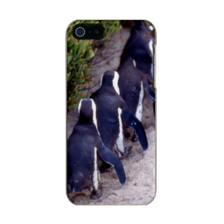 South Africa, Simons Town. Follow the leader. Metallic Phone Case For iPhone SE/5/5s