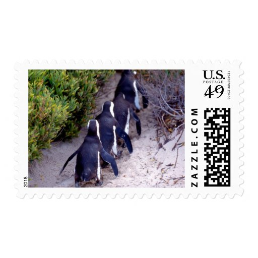 South Africa, Simons Town. Follow the leader. Postage Stamp