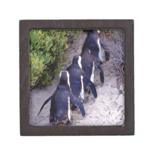 South Africa, Simons Town. Follow the leader. Premium Trinket Boxes
