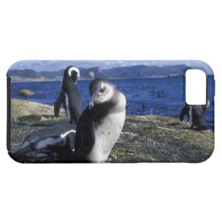 South Africa, Simon's Town, Jackass Penguin iPhone 5 Case