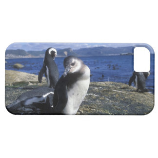 South Africa, Simon's Town, Jackass Penguin iPhone SE/5/5s Case