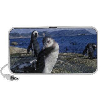South Africa, Simon's Town, Jackass Penguin Laptop Speaker